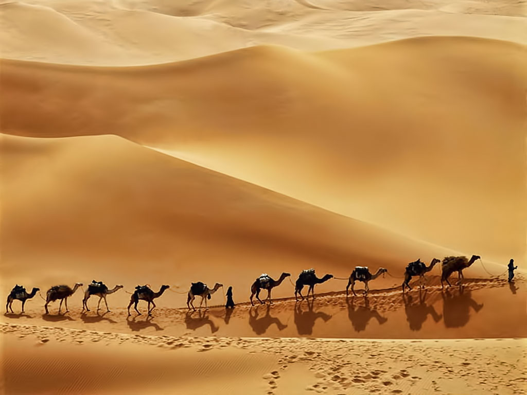 Model Mauritanian Leads A Caravan Of Camels Loaded With Sacks Of Raw Salt